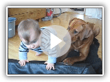 Ridgeback vs. small kid