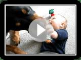 Rottweiler jugando con un niño