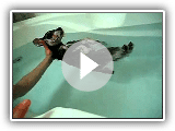Enjoying a Bath Schnauzer Terrier Puppy Dog