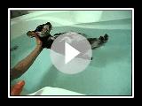Genießen einen Bad Schnauzer Terrier Welpe Hund