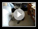 Schnauzer miniature tomber canapé de sommeil
