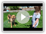 Will the Silly Bloodhound