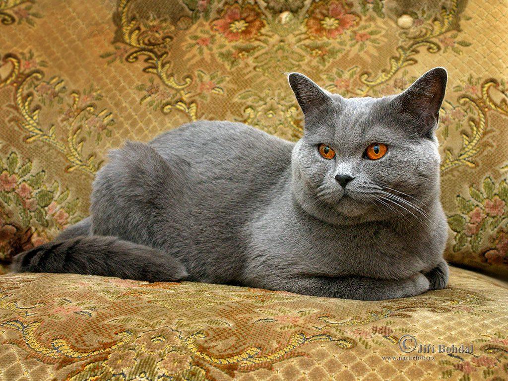 immagini gatti da color are