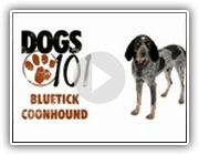 Cães 101 - Bluetick Coonhound