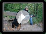 Sennenhunde Berner em turnê