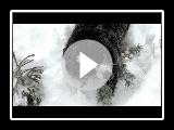 Chiens de montagne bernois dans la forêt enneigée froid