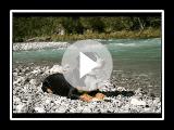 Entlebucher Sennenhund Yanni