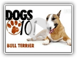 Hunde 101- Bull-Terrier