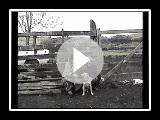 Campeiro Bulldog à des transactions - Partie I