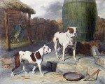 Vieux Bulldog anglais