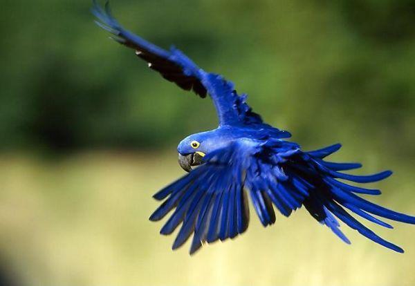 Rechercher oiseaux exotiques