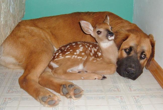 bambi_dog