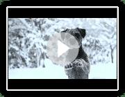 Mira & Brunft - Erstaunliche Tricks Winter!