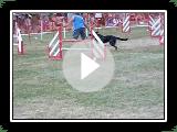 U'TOON Berger de Beauce manche 4 jumping cat C