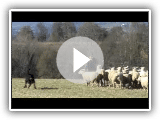 TCHAD du Chant des Bergers troupeau