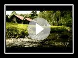 NC NOW | Plott Hounds, North Carolina State Dog | UNC-TV