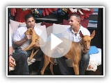 Canarian hound Interview TLD Fuerteventura at the Club island of wolves of the Podenco Canario party 1