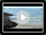 Podengo portugais medio sucht im Atlantik