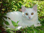 gatoblanco