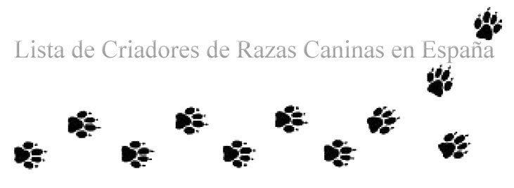 Criadores de razas de perros en España