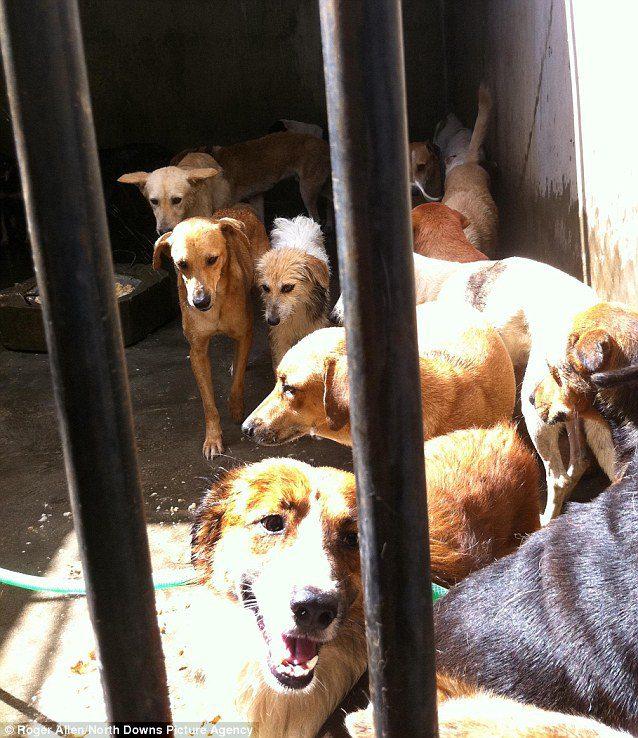 Algunos de los perros mantienen la esperanza de ser recogidos por sus dueños, aunque esa esperanza es mínima. Los dueños han de pagar por el recate de sus mascotas.