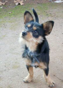 Leo, un perro supuestamente maltratado salvajemente en Linares por su dueño hasta que lo denunciaron los vecinos.