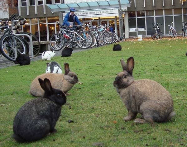 2-okunoshima-rabbit-island-in-japan