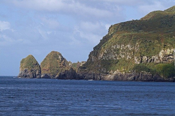 94-Mice--Gough-Island