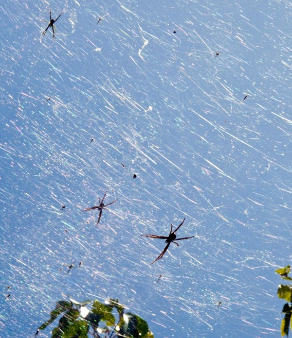 96-Guam-spider-explosion