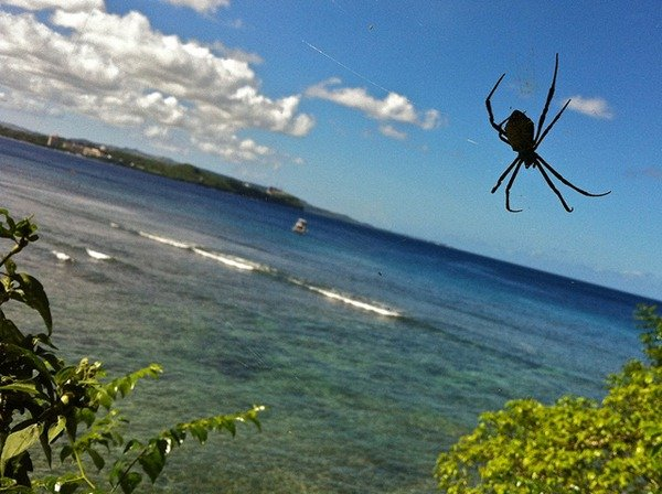97-Guam-Spinne-explosion