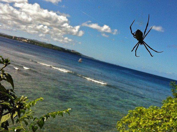 97-Guam-araignée-explosion