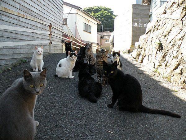 991-Tashirojima-chat-île