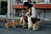 Rabbits--Okunoshima-Japan