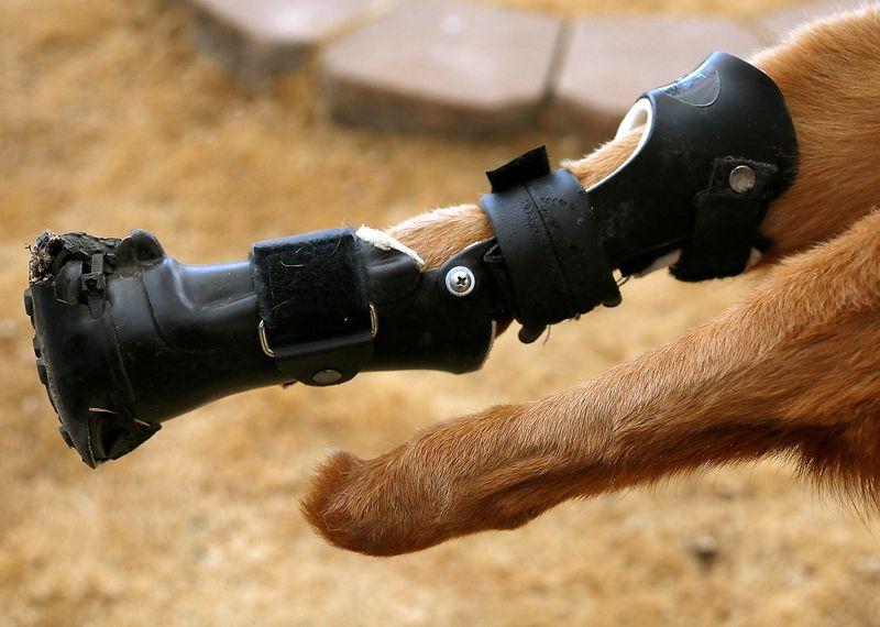 Detalhe da prótese de uma perna e o outro com ela.