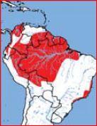 Amazona Harinosa