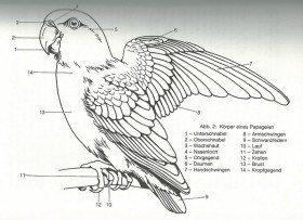 Anatomie-Papageien von