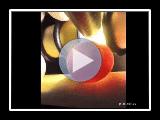 Perruche à ventre orange (Neophema chrysogaster) « Instinct »: PPC R&B
