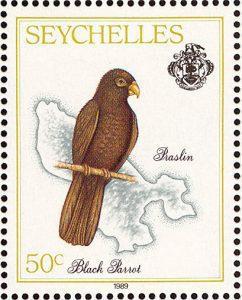 Loro de Seychelles