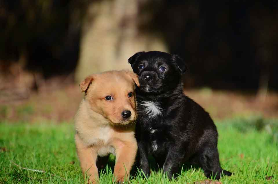 Dog puppies