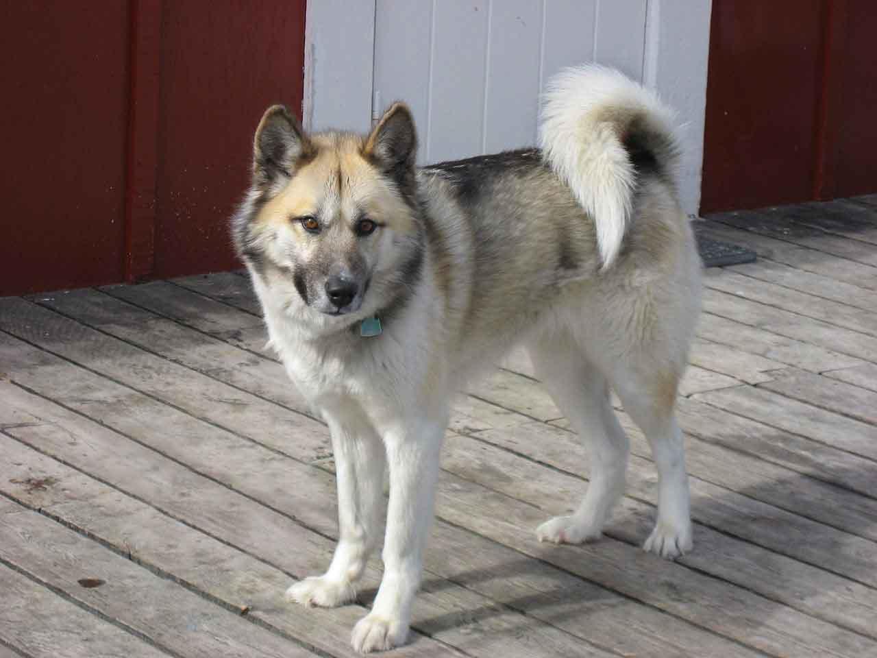 Greenlandés