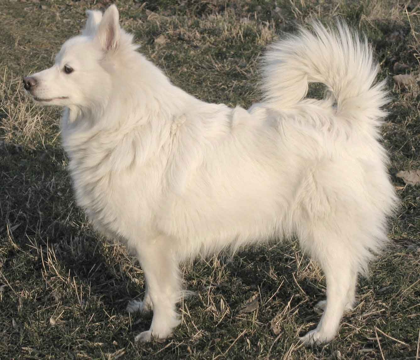Grossespitz (Giant or Large Spitz)